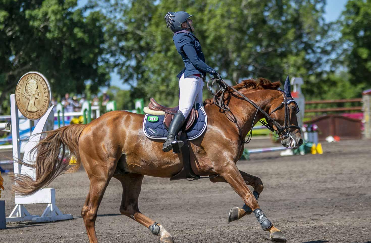 Australian Jumping Horses Of 2018 Quintago 1