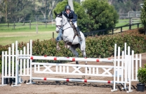 Oaks Sport Horses Young Horse Show