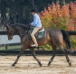 Riders and horses go forward at George Morris Clinic