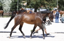 The brilliant combination of Inca Boy van T Vianahof and Edwina Tops-Alexander - LGCT Cascais, Portugal