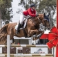 Twelve Stallions of Christmas