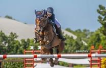 Australian Jumping Horses of 2018 - Quintago 1