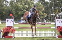 Sienna Sails to Amateur Championship Victory at JNSW Summer Show