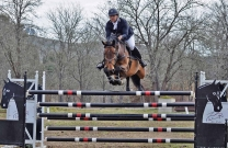 Stephen Dingwall triumphs in ACT Showjumping Cup