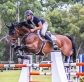 A flying start to Waratah Showjumping